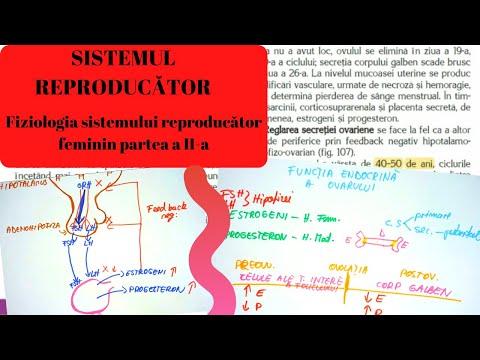 inflamația țesutului conjunctiv pe tratamentul pielii)