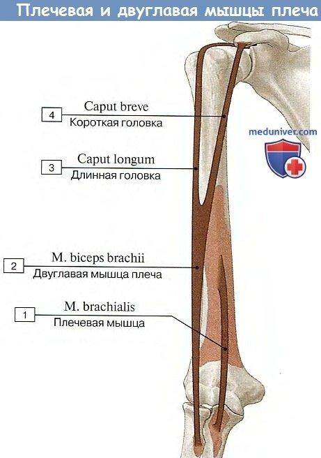 dureri articulare și oboseală unguent articular dolgin