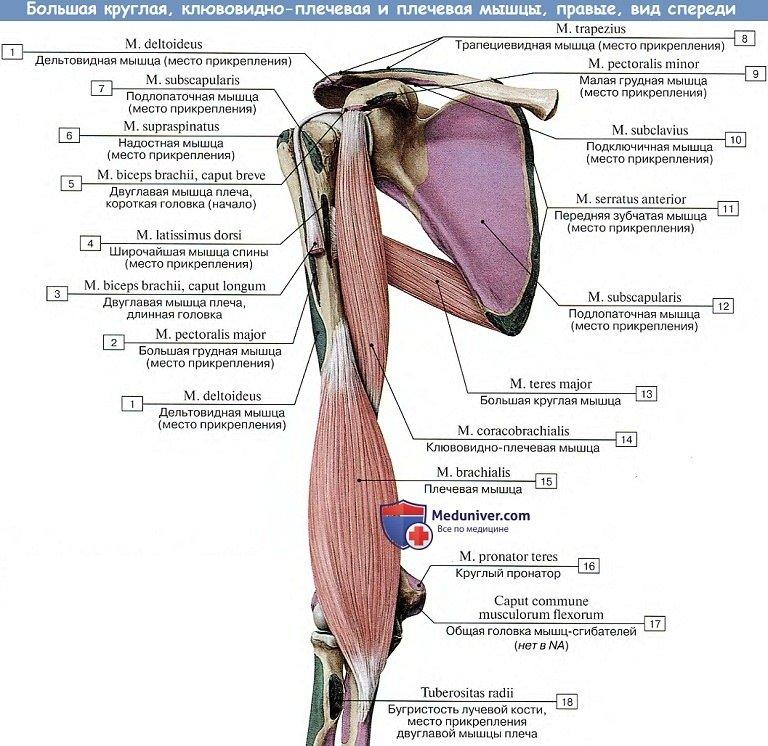 palparea genunchiului sinovita unguentelor și gelurilor articulației genunchiului