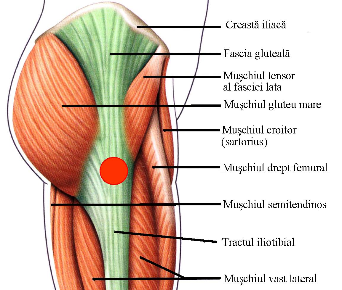 Muschiul șoldului doare)