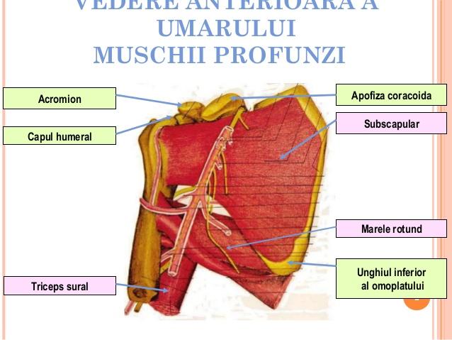 periartrita unguentului articulației umărului)